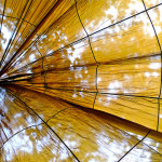 Parachute canopy by Zenas M, on Flickr